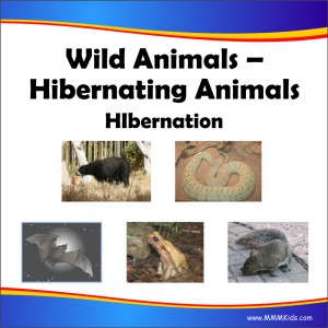 00_Hibernating_Animals
