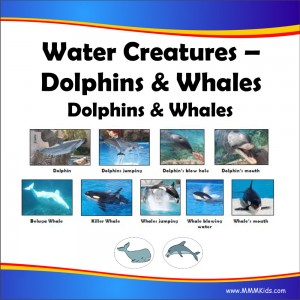 Dolphins & Whales Lesson