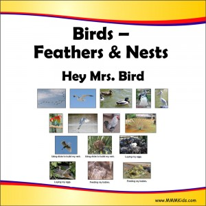 Feathers & Nests