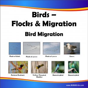 Flocks & Migration Lesson