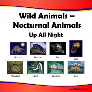 Nocturnal Animals Lesson