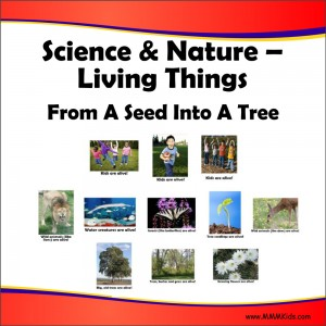 Living Things -- From A Seed Into A Tree